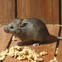Hatfield Mice Control