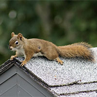 Hatfield Squirrels Control