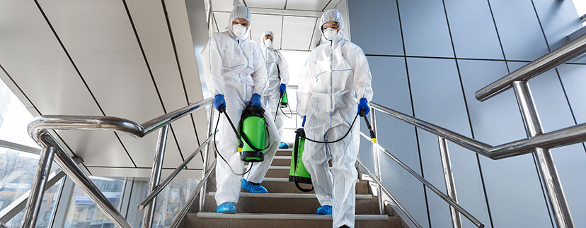 Pest control company Hatfield